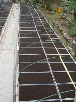 米の種まき-苗床種まき土入れ.JPG