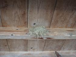 ツバメの巣-その1.JPG