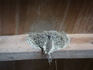 ツバメの巣-その2.JPG